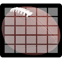 Easy Football Squares icon