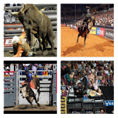 Bull Riding Live Wallpaper