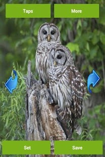 Owls Wallpapers - screenshot thumbnail