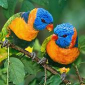 Birds Wallpapers