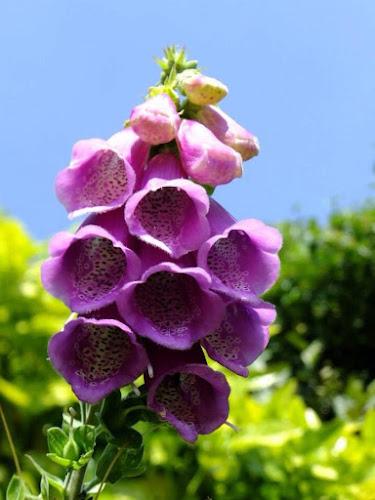 by Iain Weatherley - Flowers Single Flower ( sky, blue sky, single flower, beautiful, flower, purple flower,  )