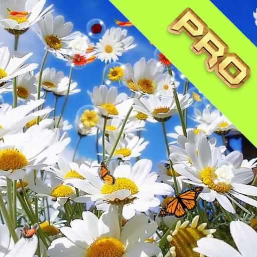 花臨動態壁紙 個人化 App LOGO-APP試玩