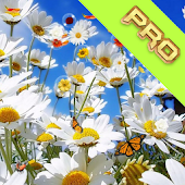Flowers Pro Live Wallpaper