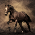 Horse HD Live Wallpapers icon