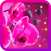 Orchid Flowers live wallpaper