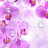 Orchid Bubbles