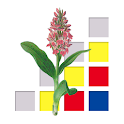 Orchideeën van Nederland logo