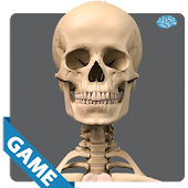 Skeletal Anatomy Game