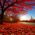 Fall (autumn) LiveWallpaper 10 icon