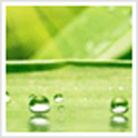 Green Leaves Theme icon