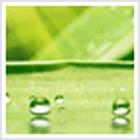 Hojas Verdes Tema icon