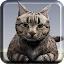 Talking Reality Cat 1.8 APK for Android