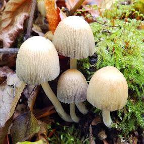 Fungi by Cliff Oakley - Nature Up Close Mushrooms & Fungi ( countryside, fungi, nature, selborne, plants, wildlife, woodland, countryside woods, hampshire )