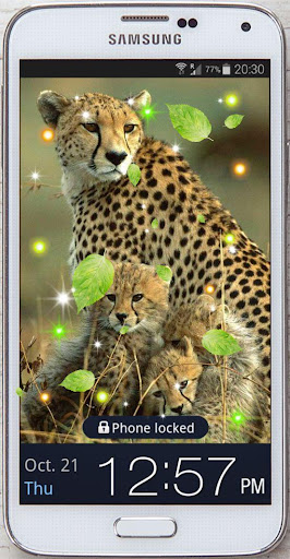 Cheetah African live Wallpaper