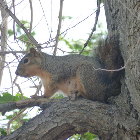 squirle in tree by Dessi Kay - Animals Other Mammals