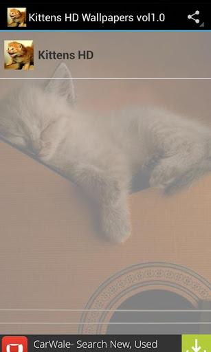 Cute Kittens HD Wallpapers