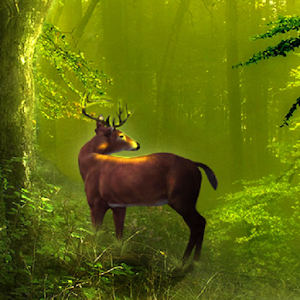 Galaxy deer hd live wallpaper android apps on google play - Hunting wallpaper for android ...