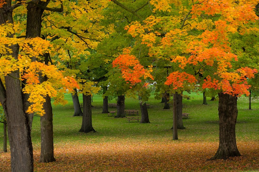 Park Benches by Khursheed Siddiqui - City,  Street & Park  City Parks ( red, benches, nature, fall colors, park, green, yellow, garden, public, bench, furniture, object, fall, color, colorful )