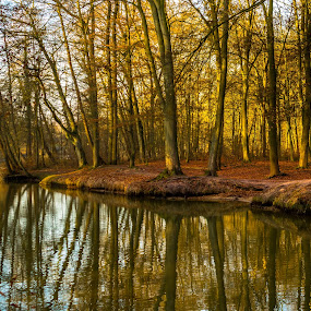 HamS by Michael Böckling - Landscapes Forests ( peaceful, winter, tree, sun, river,  )