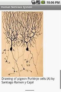 Human Nervous System Study Gui- screenshot thumbnail