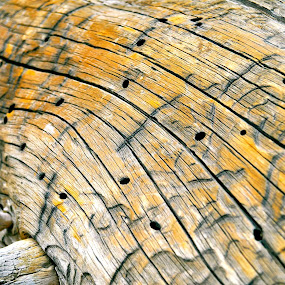 Drifted by Ash Swetland - Nature Up Close Other Natural Objects