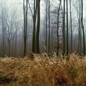 ...inversion, dreary, somewhere in the forest... by Pavel Olivík - Landscapes Forests