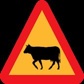 Vache Taureau