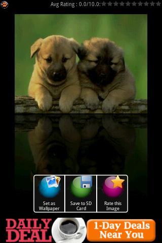 Crystal Puppies Wallpapers - screenshot