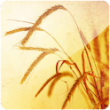 3D Wheat Fields logo