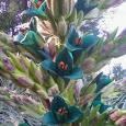 The San Diego Botanic Garden