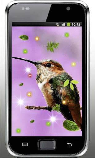 【免費個人化App】Colibri Love HD live wallpaper-APP點子