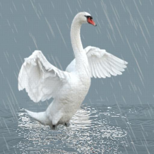 Гифка лебедь, открытку