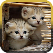 Pet Cats Rescue Free Games