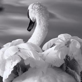 by Johnny Gomez - Black & White Animals