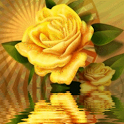 Yellow Rose Reflecting icon