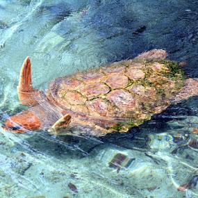 by Milton Moreno - Animals Sea Creatures ( , blue, orange. color, sea creatures, underwater life, ocean life )