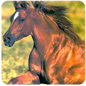 Beautiful Horses Wallpaper icon