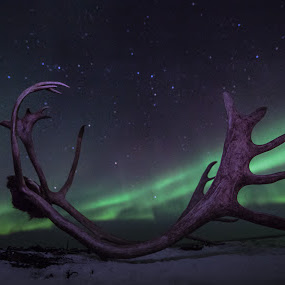 reindeer antlers and aurora boreoalis by Benny Høynes - Nature Up Close Other Natural Objects ( winter, northernlights, reindeerantlers, aurora, norway )
