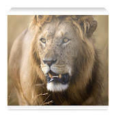 Kenya Wildlife App