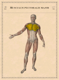 Classic Anatomy - screenshot thumbnail