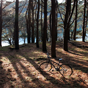 Lone bike by Kirsten Gamby - Artistic Objects Other Objects ( bicycle in forest, bike, bike in nature, bike on stand, bicycle,  )