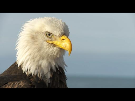 玩免費教育APP 下載Video Touch - 鸟类 app不用錢 硬是要APP