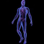 Gray's Human Anatomy