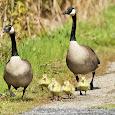 Birds - Northeast US