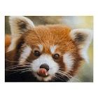 Red Panda HD Wallpaper icon