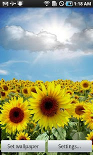 Sunflower LW Free + weather - screenshot thumbnail