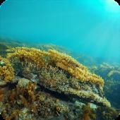 Bunurong Marine Field Guide