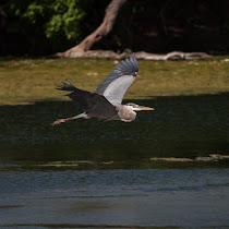 Spring Lake Biodiversity