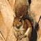 DSCN0014_squirrel-perched-on-cabbage-palm-c.jpg