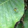 Horny Spider